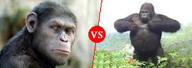 Ape vs Gorilla