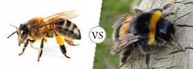 Bees vs Bumblebees