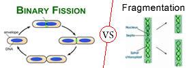 Binary Fission vs Fragmentation