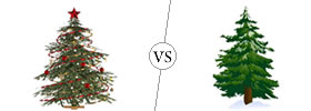 Christmas Tree vs Pine Tree