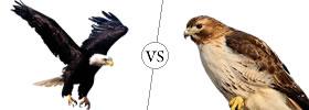 Eagle vs Hawk