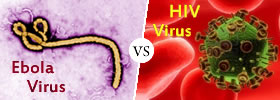 Ebola virus vs HIV virus