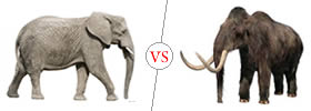 Elephant vs Mammoth