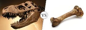 Fossil vs Bone