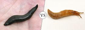 Leech vs Slug