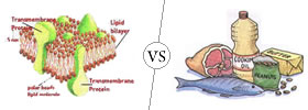 Lipids vs Fats