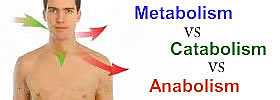 Metabolism vs Catabolism vs Anabolism