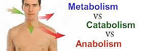 Metabolism vs Catabolism vs Anabolism