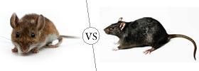Mice vs Rats
