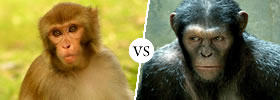 Monkey vs Ape