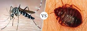 Mosquito vs Bed Bug Bites