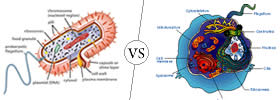 Prokaryotic vs Eukaryotic Cell