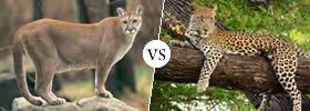 Puma vs Leopard