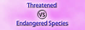 Threatened vs Endangered Species
