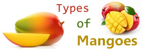 Different Types of Mangoes