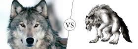 Wolf vs Werewolf