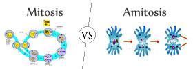 Mitosis vs Amitosis