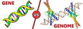 Gene vs Genome