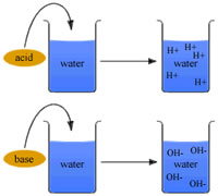 substances that turn into bases and acids An acid can turn into a base if you mix a much stronger base with it that way the base acid overpowers the acid and makes the acid a base.