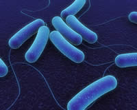 Difference between Archaea and Bacteria | Archaea vs Bacteria