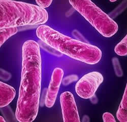 an analysis of the structure and growth of bacteria a type of microscopic singular celled organisms This group includes the familiar organisms mushrooms  earth has been dominated by the microscopic bacteria and  what are fungi - types and characteristics.