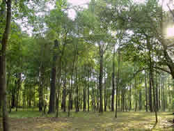 the difference between a jungle and a rain forest Differences between rainforest and tundra  oo guoxuan (differences between rainforest and tu  difference between tundra and forest.