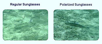 Difference between Polarized and Regular Sunglasses ...