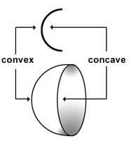 Image result for concave convex