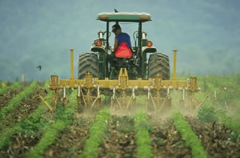Difference between Organic and Chemical Farming | Organic vs ...