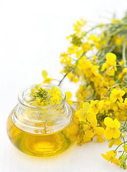 difference between canola and vegetable oil in baking