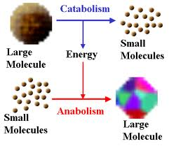anabolic reactions use atp
