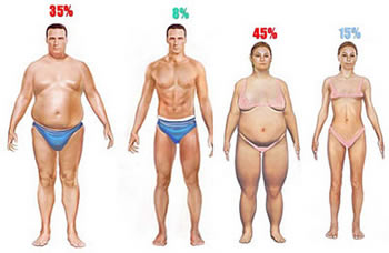 What Percentage Of Body Fat