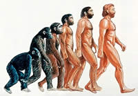 a study of microevolution and macroevolution Case studies in evolution examine examples of evolution in microevolution and macroevolution one way to flush out the process of evolution is to do a case study.