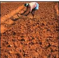 Different types of soils in india different types of for Information about different types of soil