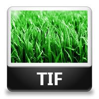 Difference between TIF and TIFF   TIF vs TIFF