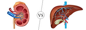 Difference between Kidney and Liver