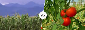 Difference between Agriculture and Horticulture