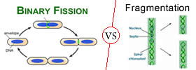 Difference between Binary Fission and Fragmentation