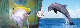 Difference between Fish and Dolphin