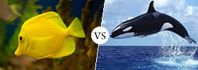 Difference between Fish and Whale