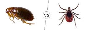 Fleas vs Ticks