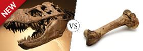 Fossil vs Bone
