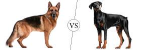 Difference between German Shepherd and Doberman