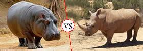 Difference between Hippopotamus and Rhinoceros