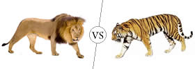 Difference between Lion and Tiger