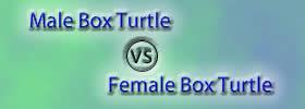 Male vs Female Box Turtle