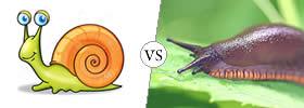 Snail vs Slug