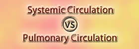 Systemic Circulation vs Pulmonary Circulation