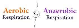 Aerobic Respiration vs Anaerobic Respiration