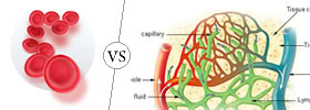 Blood vs Lymph